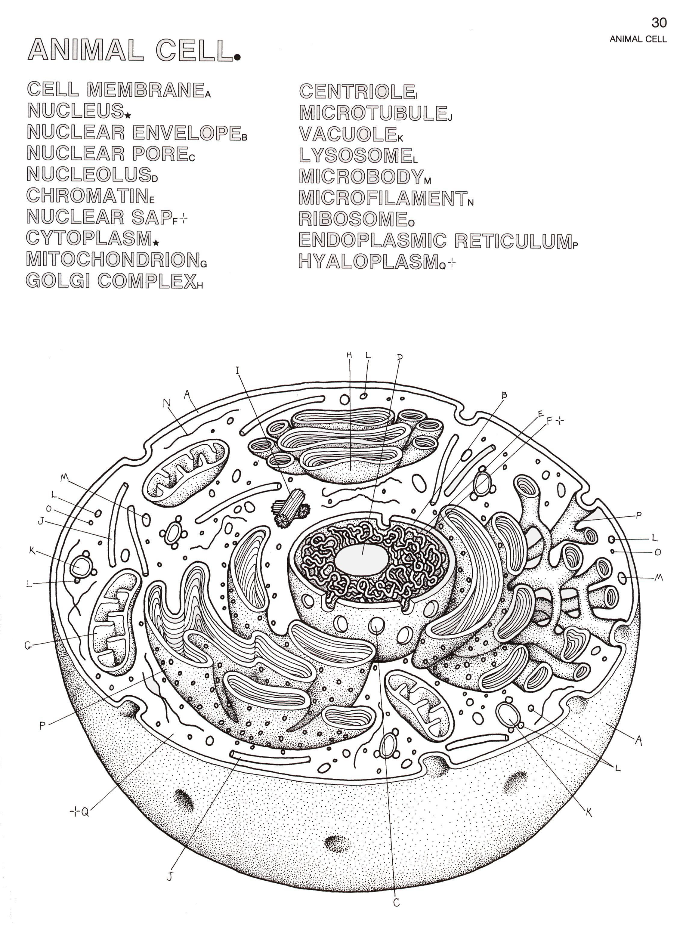 Biology Coloring Pages Book Jpg 2280 3081 Cells Worksheet Animal Cells Worksheet Plant And Animal Cells