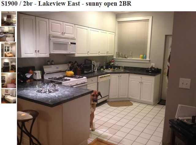 Dog Photobombs Every Picture In Craigslist Apartment Listing Apartment Listings Apartments For Rent Apartment Life