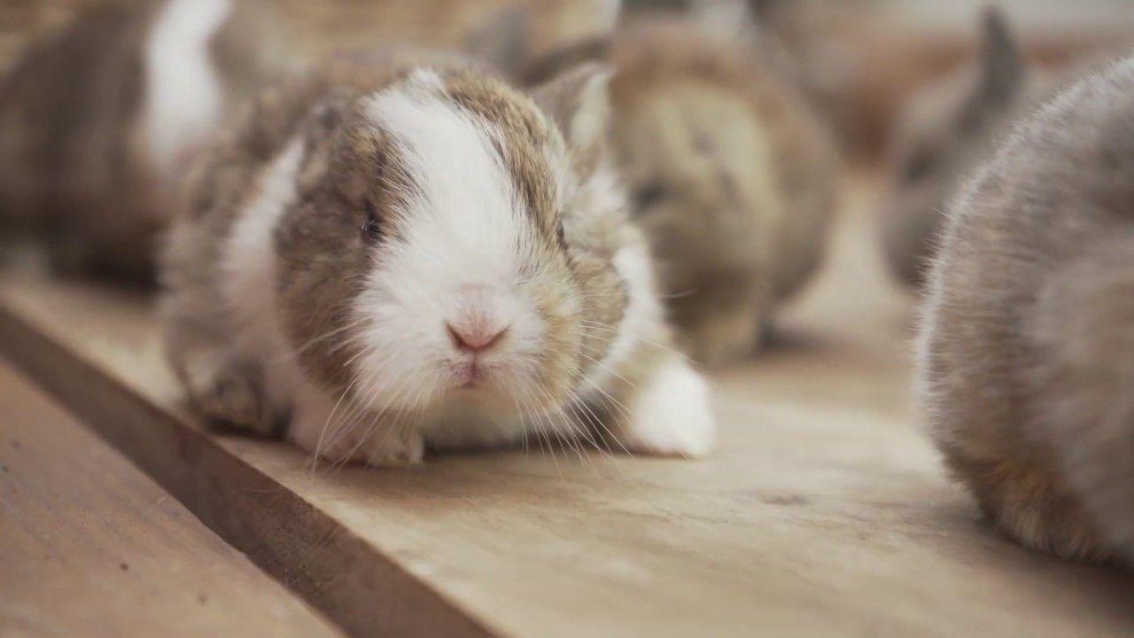 Baby Bunnies In A Basket 4k In 2020 Cute Baby Bunnies Baby Bunnies Cute Bunny