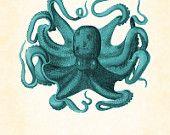 Vintage Octopus Aqua Natural History Art Print 8 x 10
