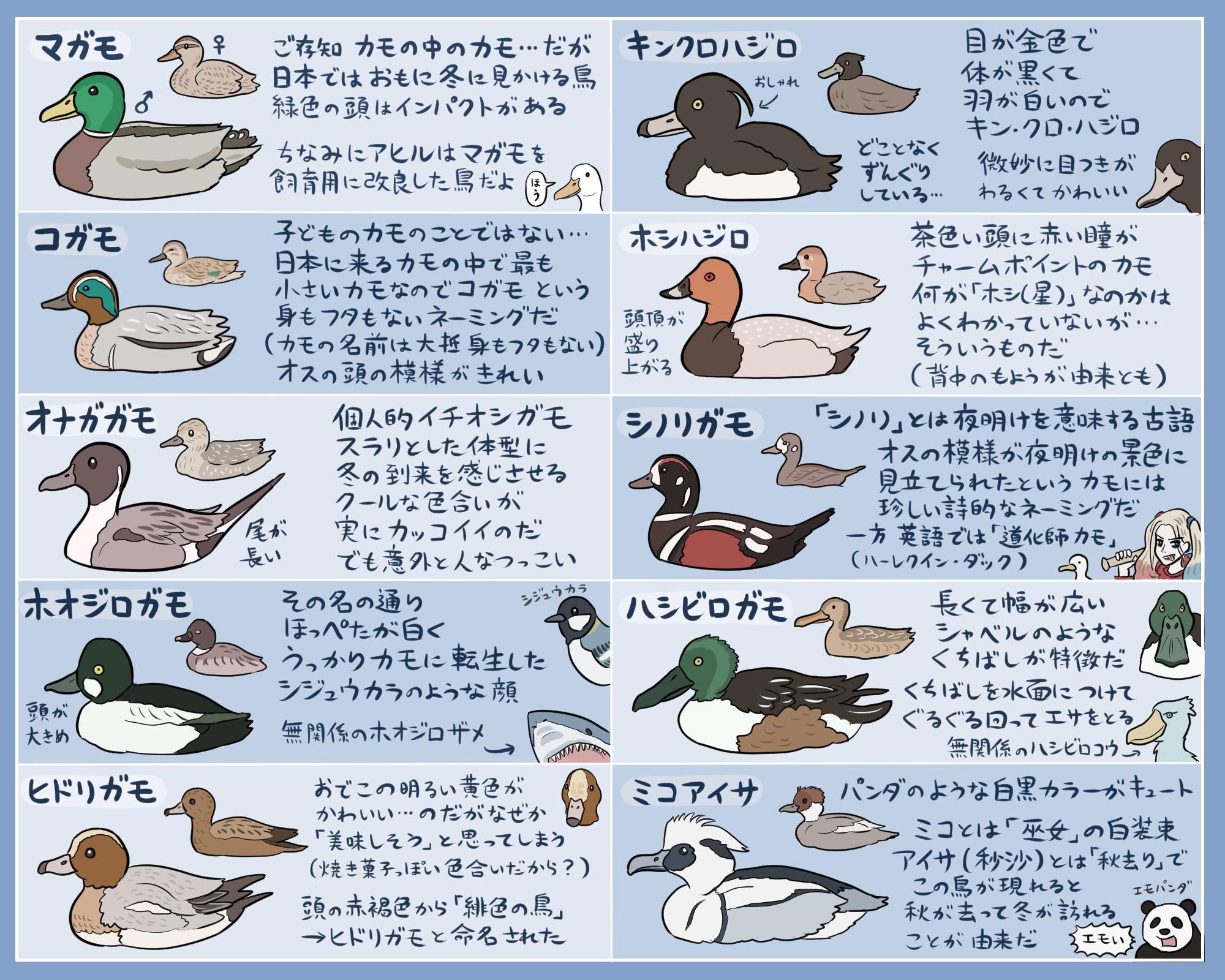 鳥と動物たちのイラスト」おしゃれまとめの人気アイデア|pinterest