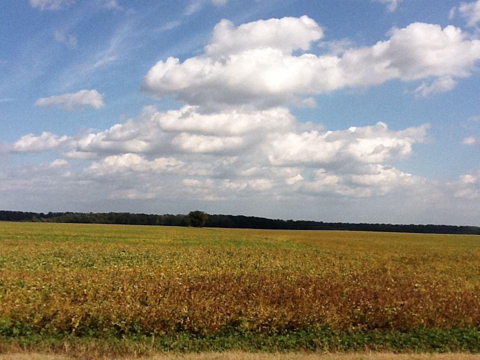 Highway 45 South near Bradford, TN Natural landmarks