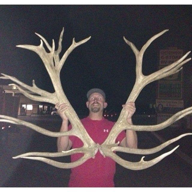 Record elk sheds | antler trader | hunting| shed hunting
