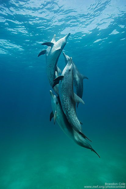 Happy #WorldOceansDay! A few photos that remind us of the wild animals that depend on our world's oceans.