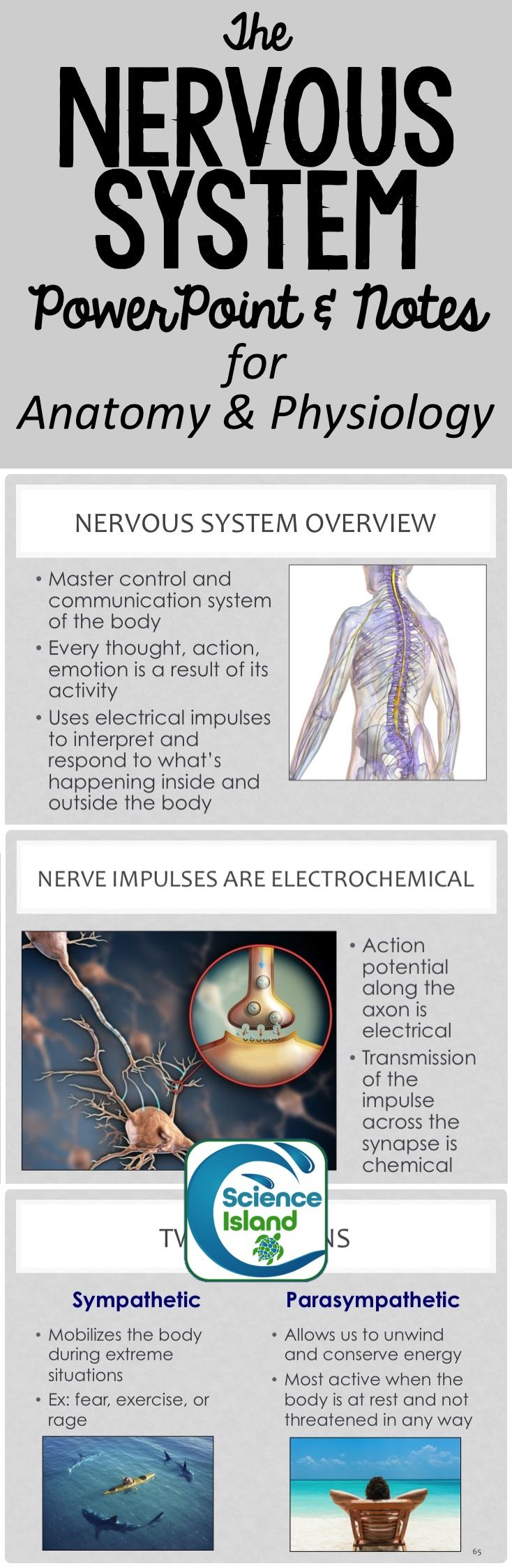 Nervous System PowerPoint and Notes | Nursing school | Pinterest