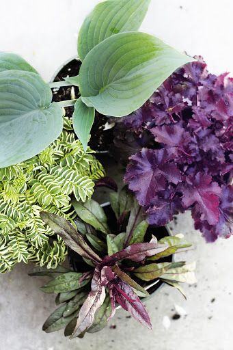Tips for Choosing Foundation Garden Plants by Deuce Cities