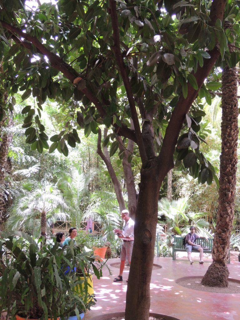 Marrakech Days Majorelle Gardens أيام مراكش حدائق ماجورال Plants Garden