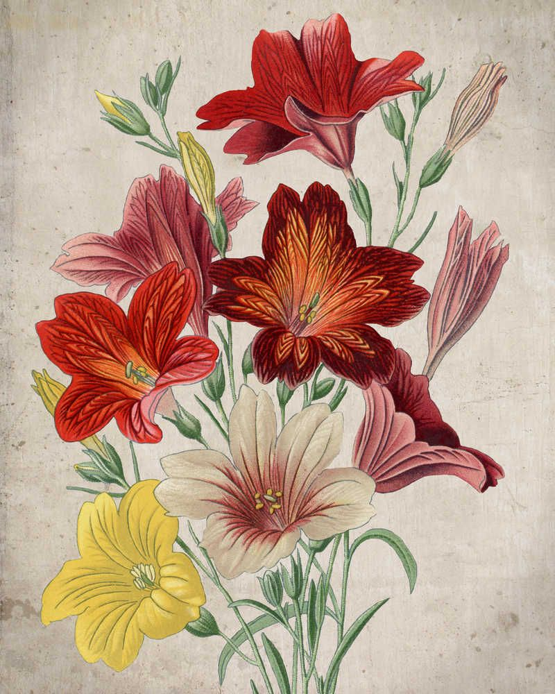 Red Yellow And White Flowers Vintage Print Birthday Gifts
