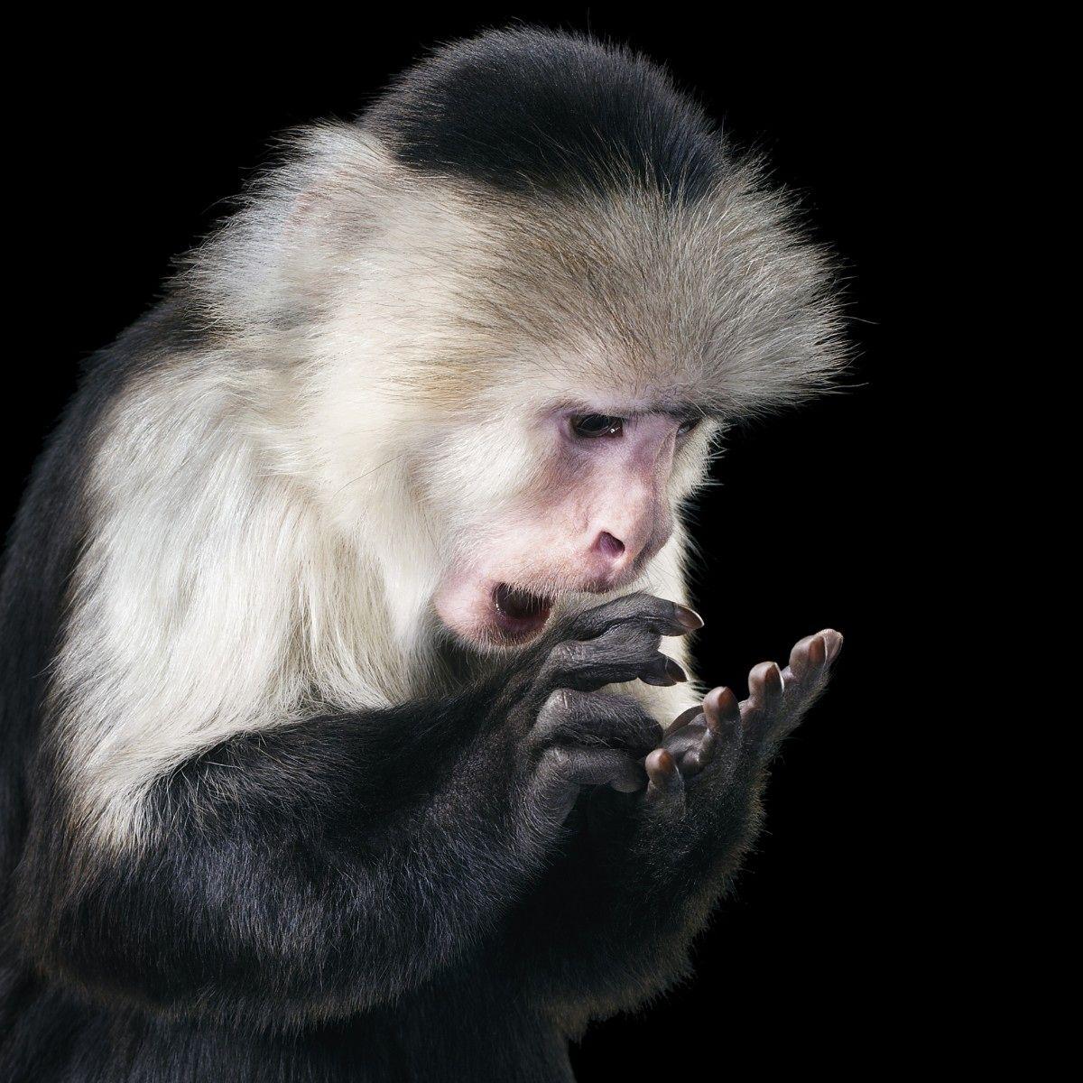 Se Tim Flachs Spektakulære Dyreportretter Her Monkey Pinterest