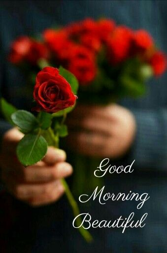 Good Morning Red Roses Beautiful Roses Beautiful Flowers