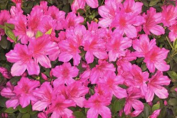 The Best Flowers To Plant In Morning Sun Afternoon Shade With