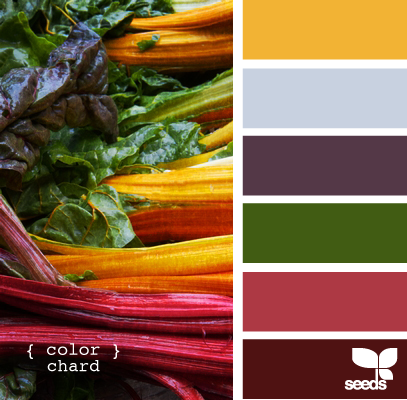color chard