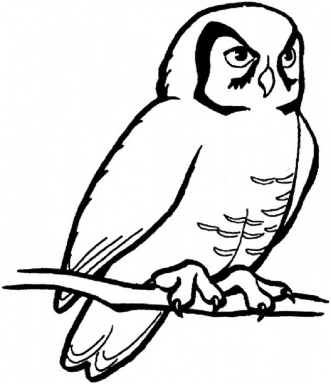 realistic snowy owl coloring pages | coloring Pages | Pinterest