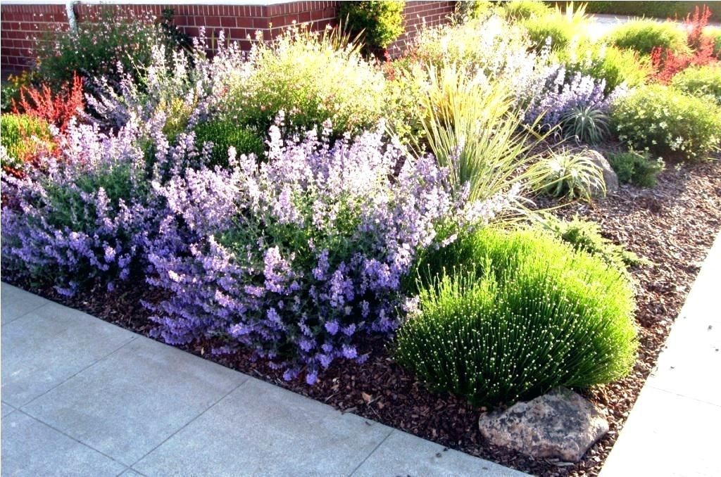 Southern California Landscaping Ideas Low Water Landscaping ...
