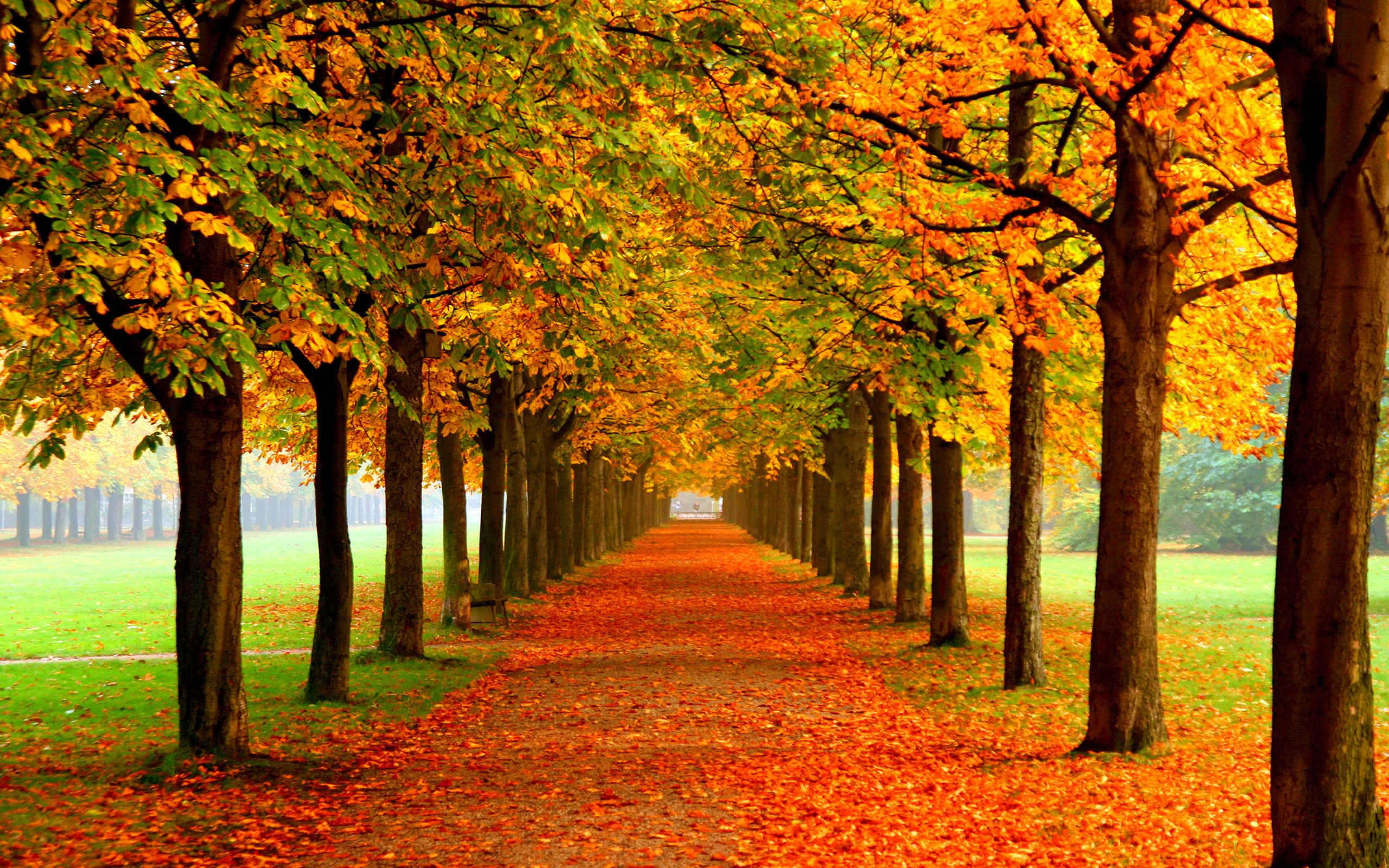 2560x1600 Erde Natur Herbst Wallpaper Autumn Trees Colorful