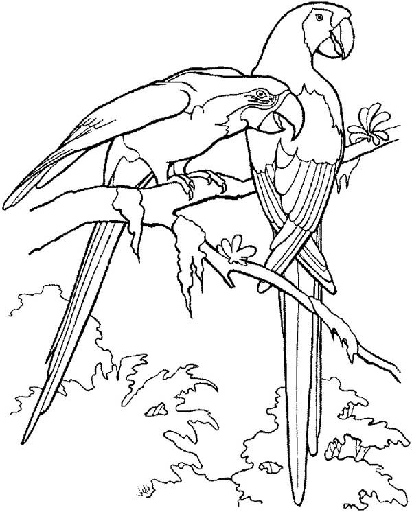 two macau parrot coloring page