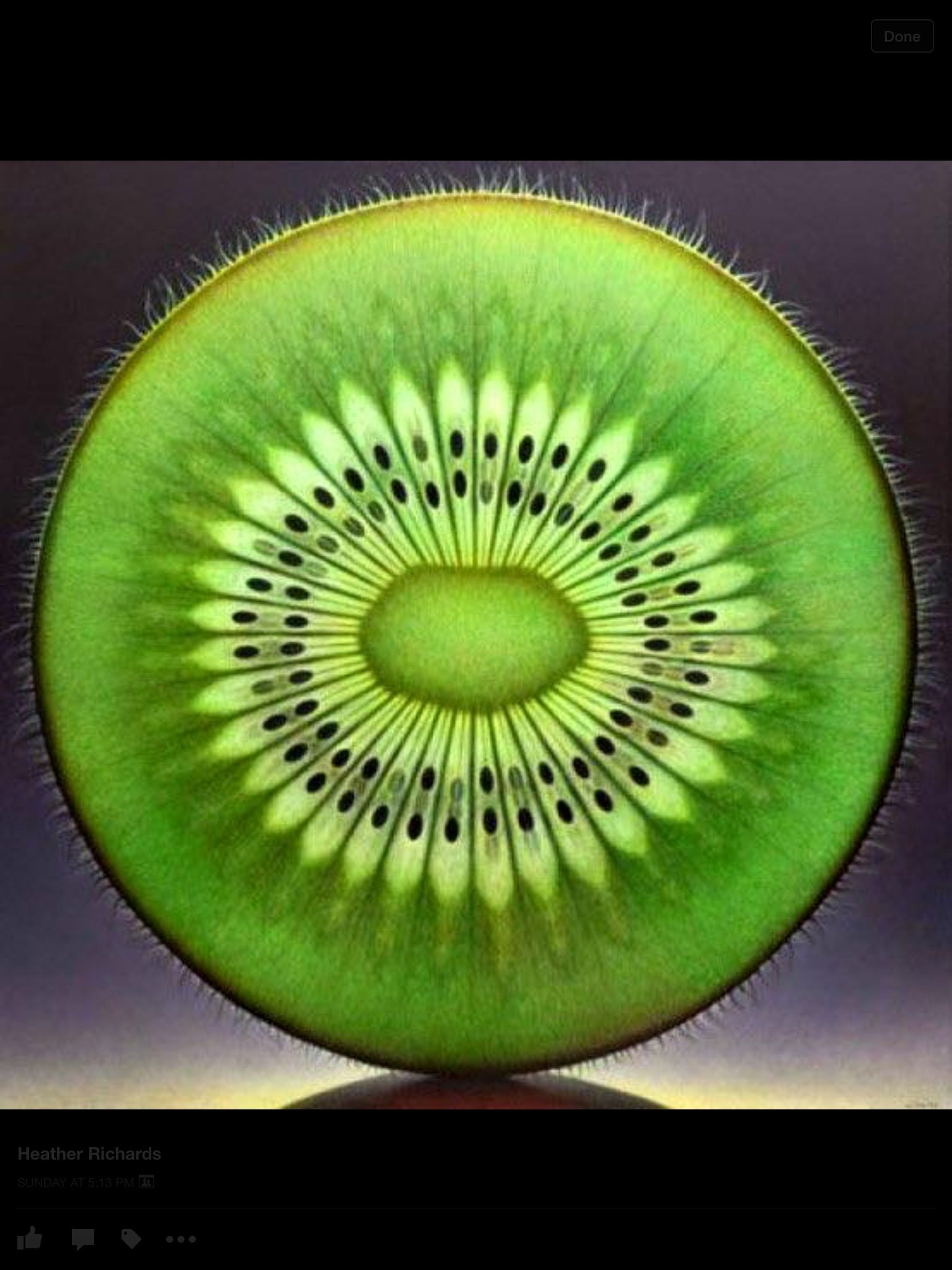 The Seed Of The Suns Fractals In Nature Patterns In Nature Geometry In Nature