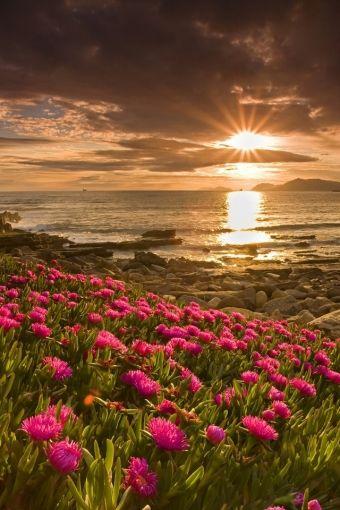 Sunset On Flower Field Sunrise Wallpaper Beautiful Landscapes Beautiful Nature