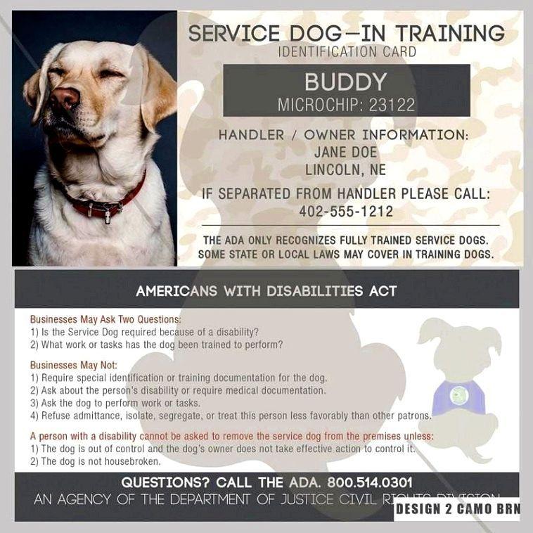 Dog Training Tricks Dogtrainingtricks Dog Training Obedience