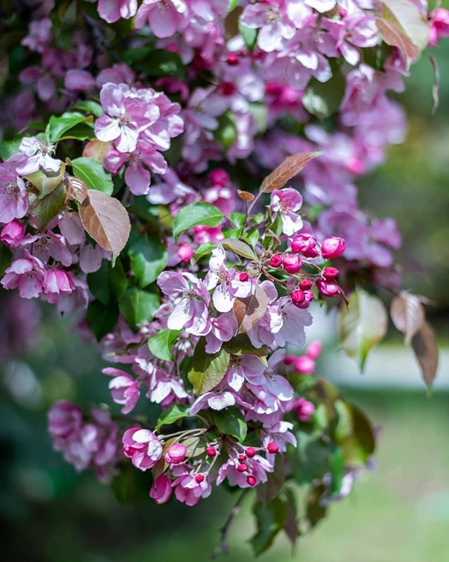 Still in a floral mood 🌺🌸😁 ⠀⠀⠀⠀⠀⠀⠀⠀⠀ ⠀⠀⠀⠀⠀⠀⠀⠀⠀ ⠀⠀⠀⠀⠀⠀⠀⠀⠀ ⠀⠀⠀⠀⠀⠀⠀⠀⠀ ⠀⠀⠀⠀⠀⠀⠀⠀⠀ ⠀⠀⠀⠀⠀⠀⠀⠀⠀ ⠀⠀⠀⠀⠀⠀⠀⠀⠀ #agameoftone #everydayphotography #everydayphoto #liveinthenow #naturehealsthesoul #canonmoments #gurushotschallenge #inspiremygram #darlingmovements #beboundless #folkvibes #thewonderco #liveauthentically #myproshot #viewbugfeature #canonmoment #wonderlustcollective #darlingmoments #risingtide #theartofslowingdown #startwithwhy #folkcreatives #bigmagic #calledtocreate #thinkcreative