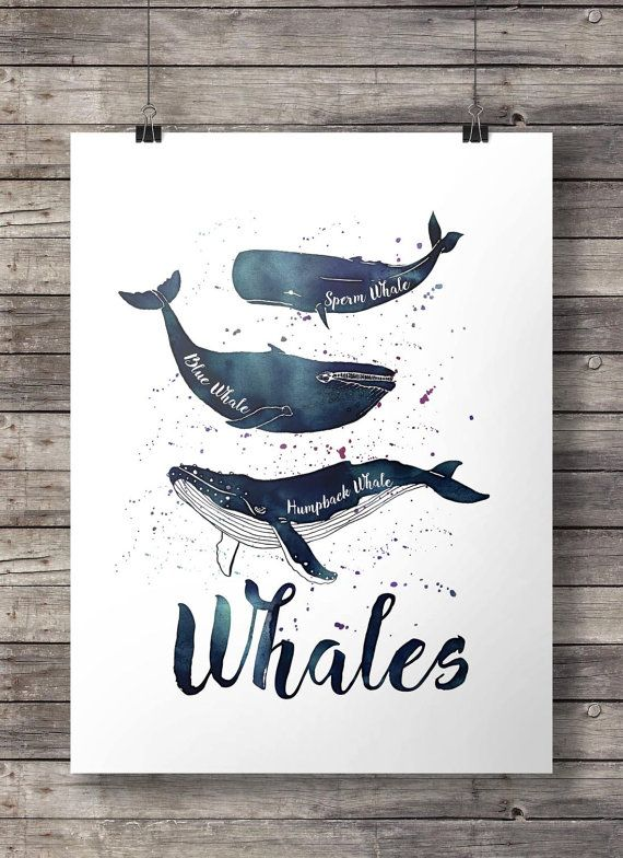 Photo of Items similar to whale nautical watercolor print humpback whale sperm whale blue whale nautical ocean decor printable wall art painted whales on Etsy