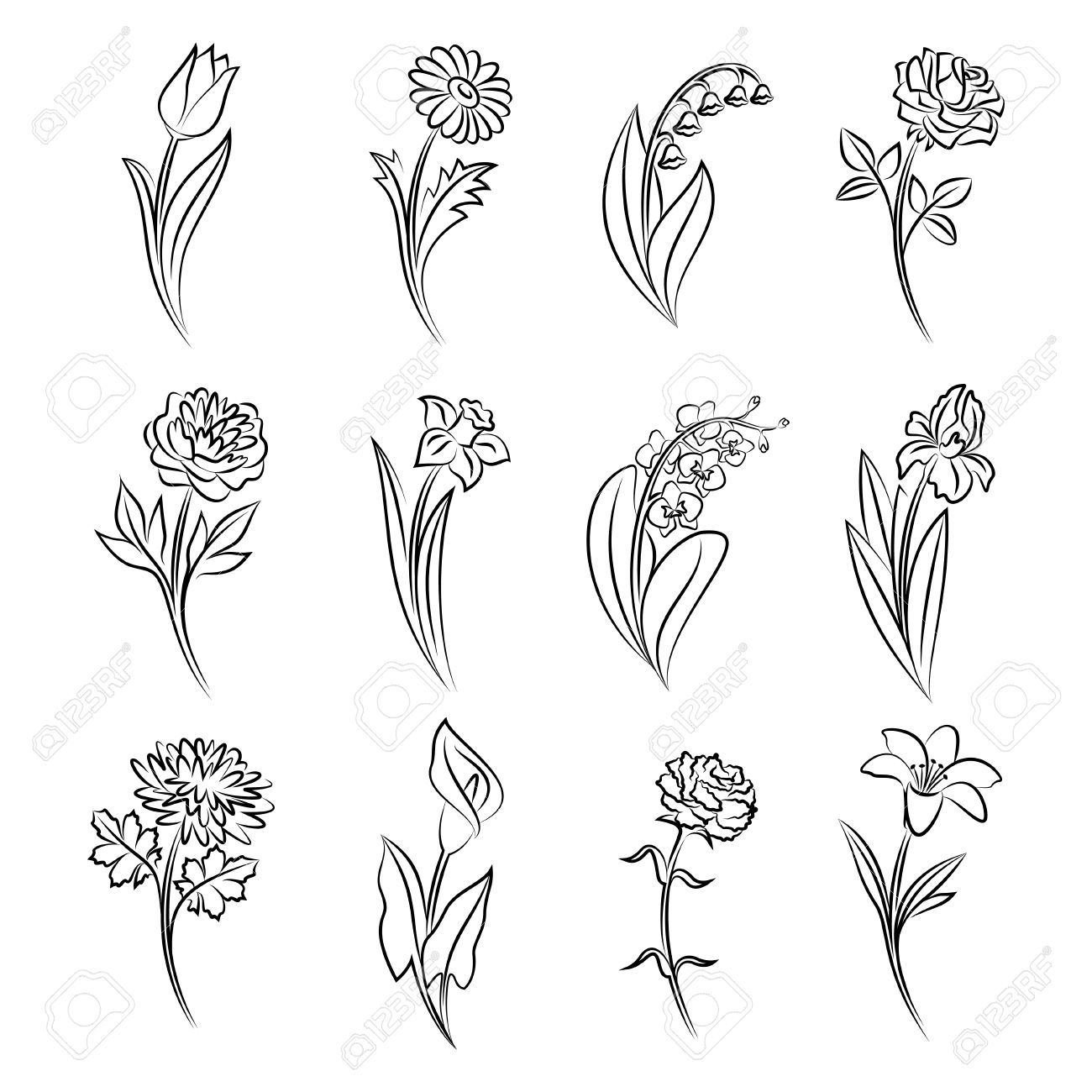 Outline Of Flowers Tulip Chamomile Lily Of The Valley Rose