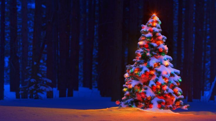 Christmas Tree Lights Bokeh Forest Trees Snow Winter Color Wallpaper Background Christmas Tree Wallpaper Christmas Lights Wallpaper Christmas Desktop Wallpaper