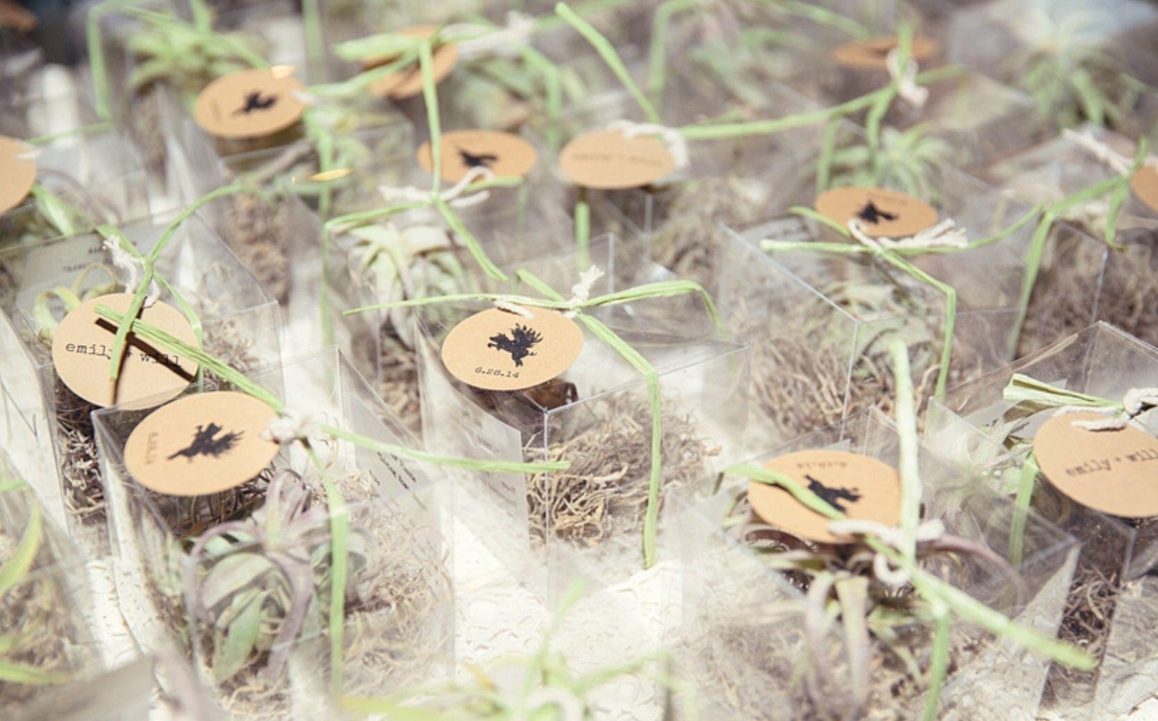 Air Plant wedding favor take aways | Air Plants | Pinterest | Plant ...