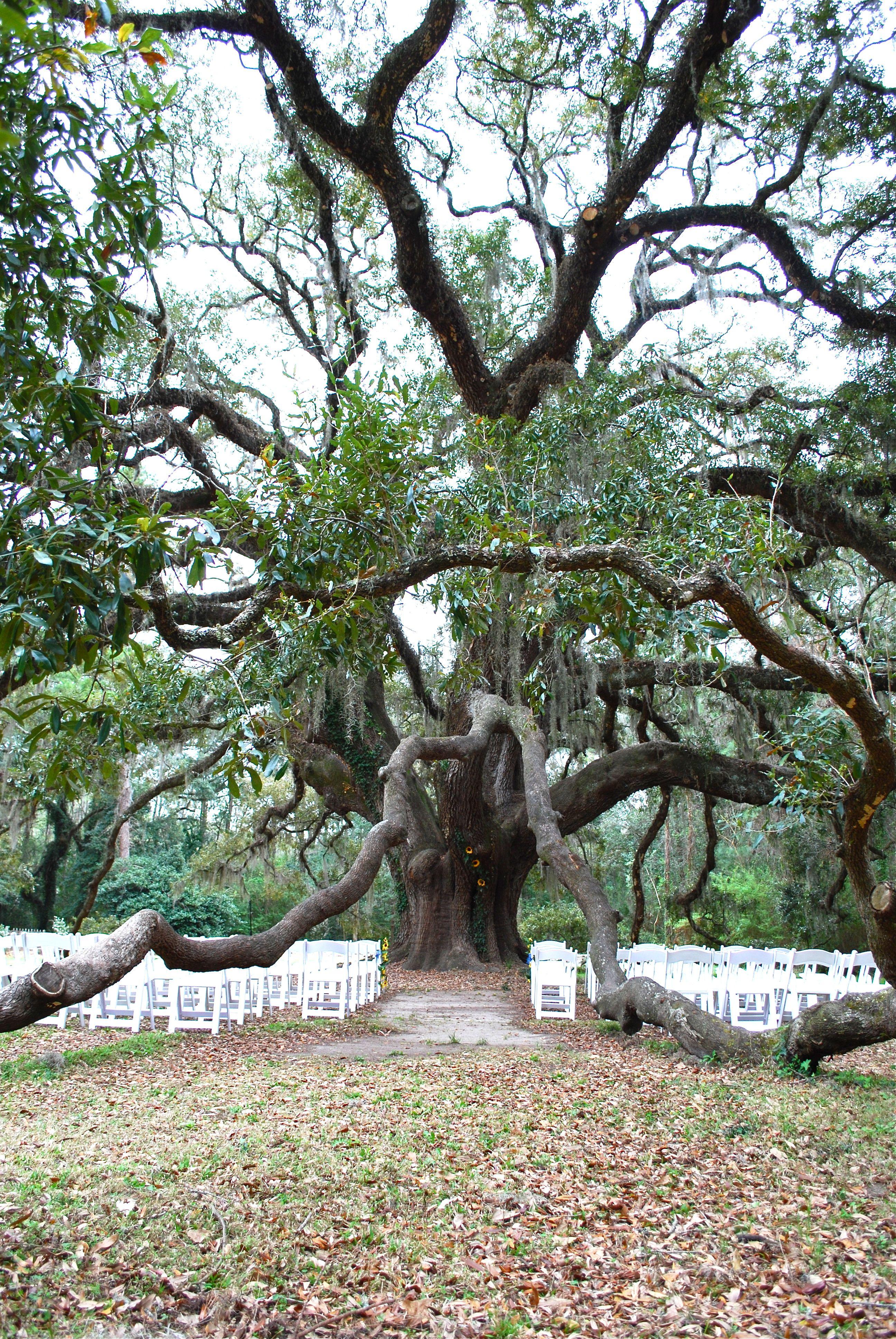 Our Wedding Location, Lichgate Park, Tallahassee, FL.