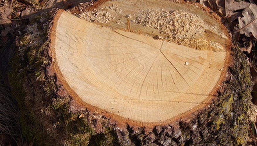 Use rock salt to kill stump roots Kill tree roots, Tree