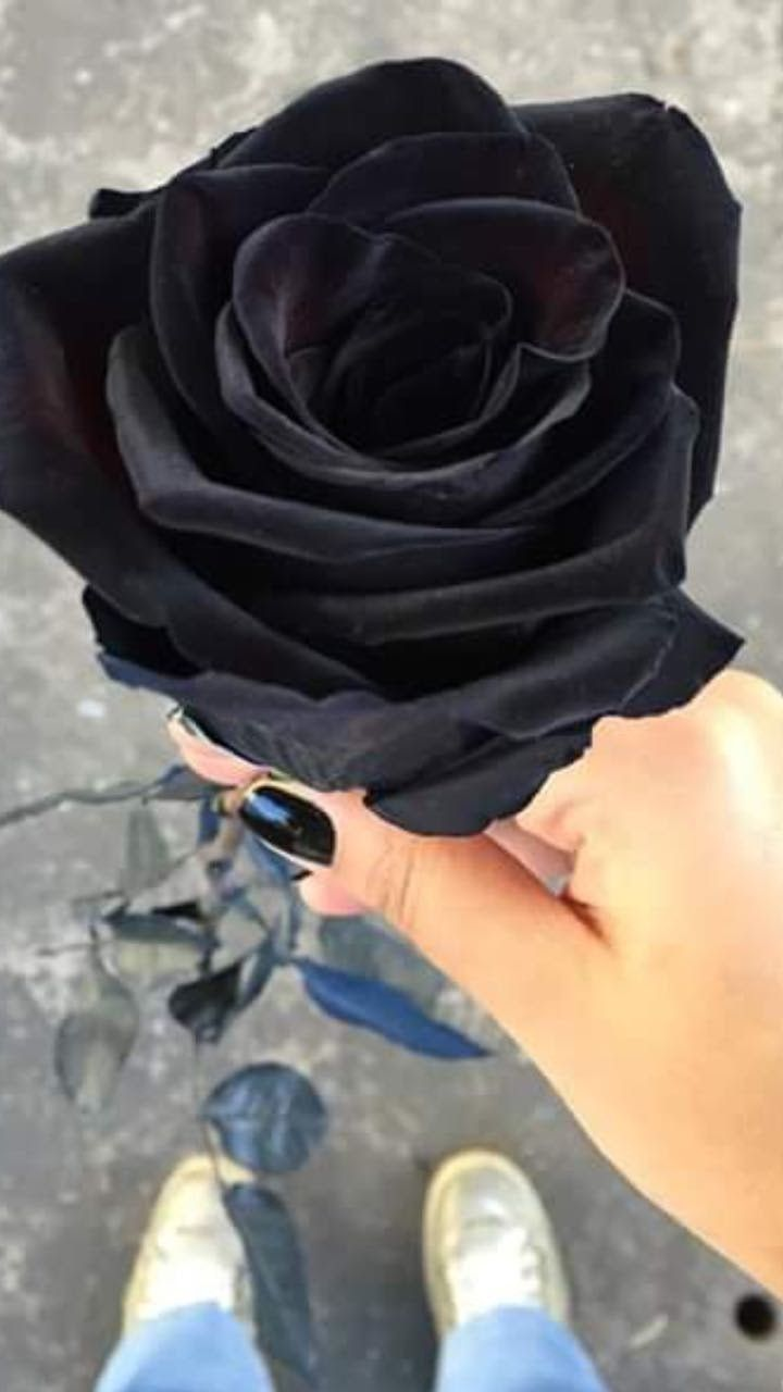 Download Most Downloaded Black Wallpaper Iphone Dark Rose for iPhone 11 Today