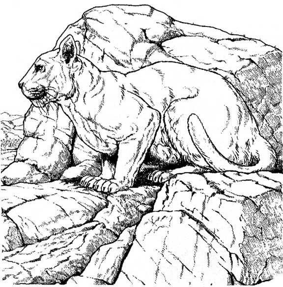Wildlife Coloring Pages For Adults IMG 74757 In Post At June 2017