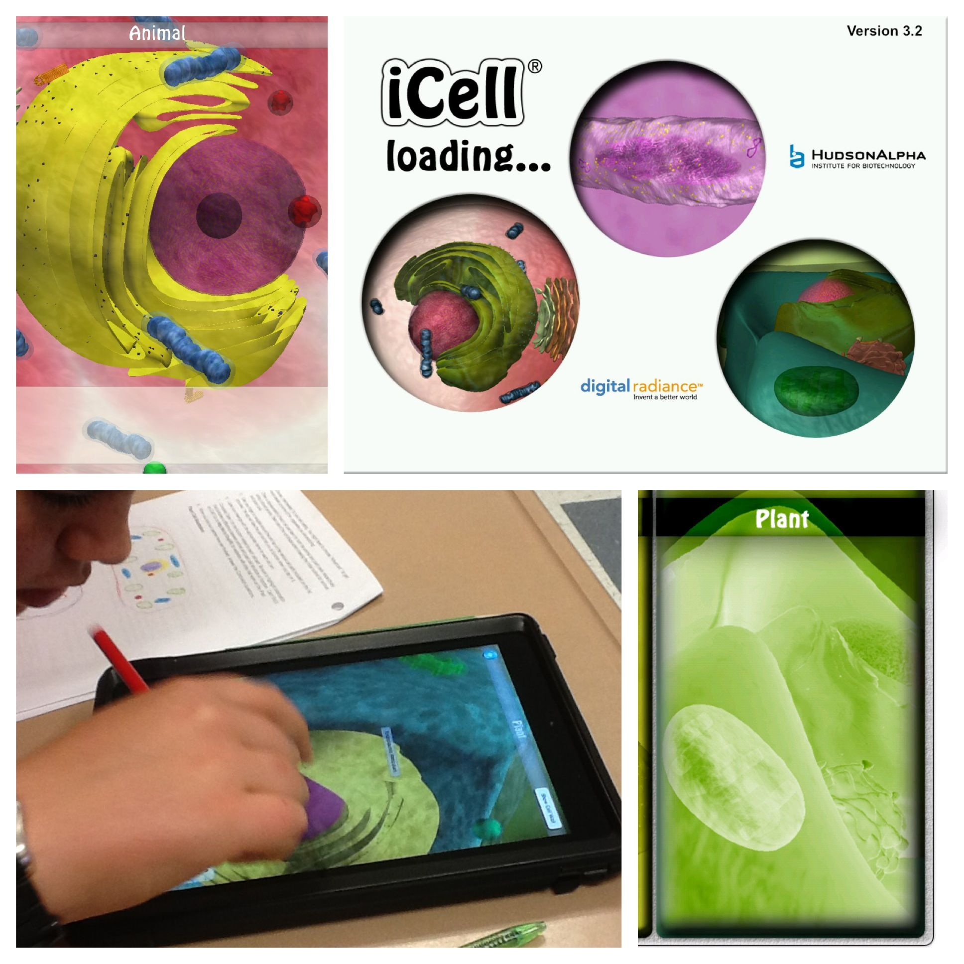 Using Icell By Hudsonalpha Science Cells Learning Science Plant And Animal Cells [ 1936 x 1936 Pixel ]