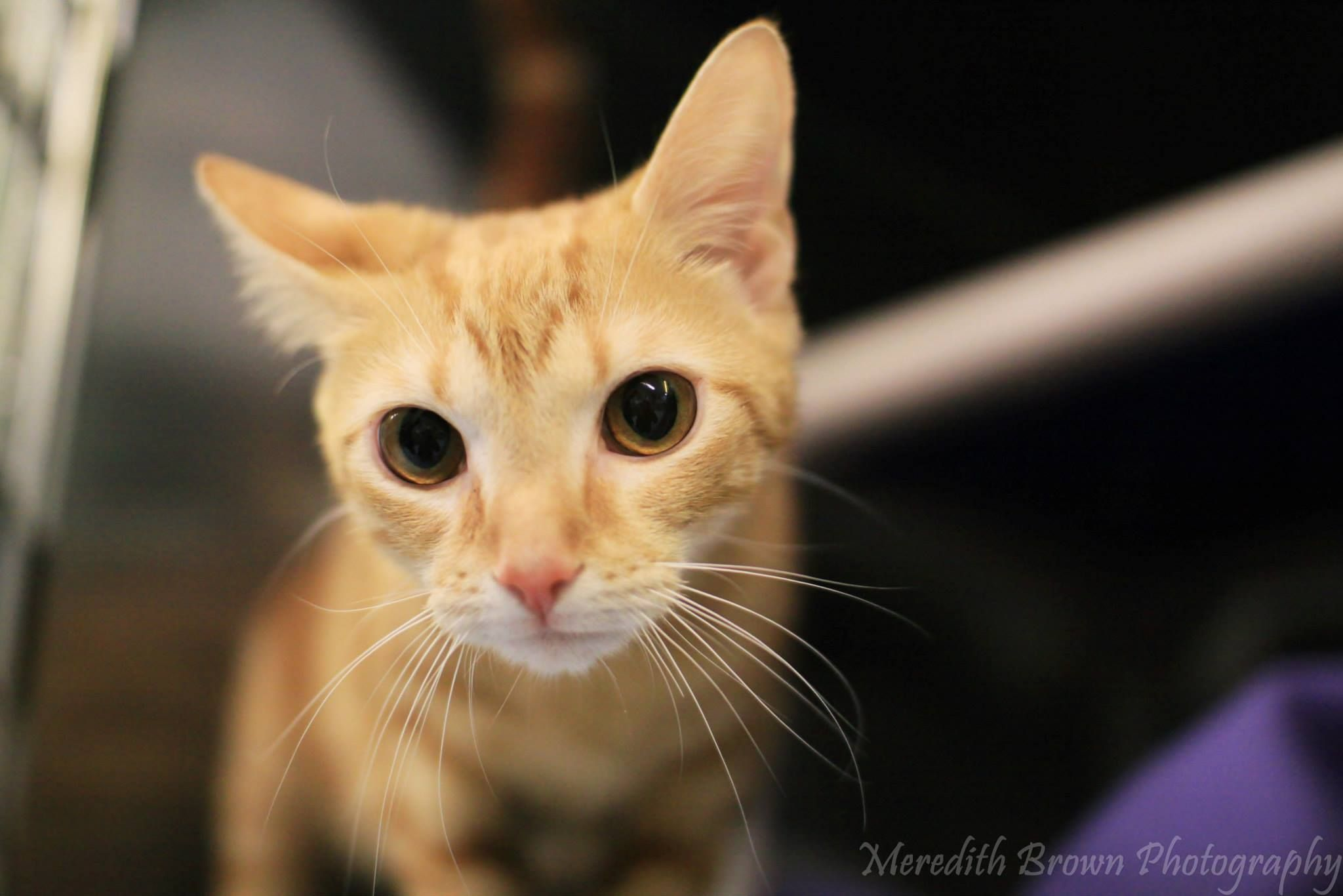 4843 Piper is a 10 month old female who arrived at the