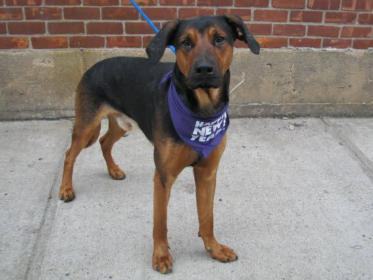 SAFE --- URGENT - Brooklyn Center   SHADOW - A0987787  *** SAFER: EXPERIENCED HOME ***   MAIN THREAD: https://www.facebook.com/photo.php?fbid=733461696666712&set=a.617941078218775.1073741869.152876678058553&type=3&theater
