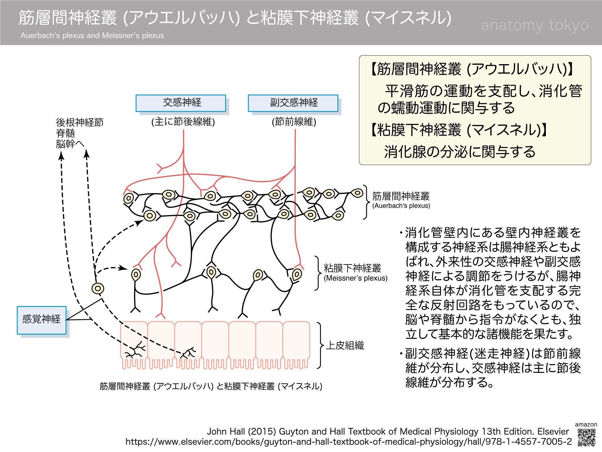 神経 叢 頚