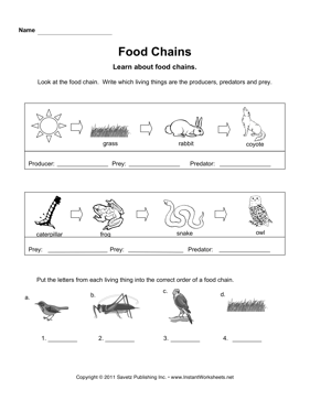 Food Chains Food Chain Worksheet Food Web Science Food Chains