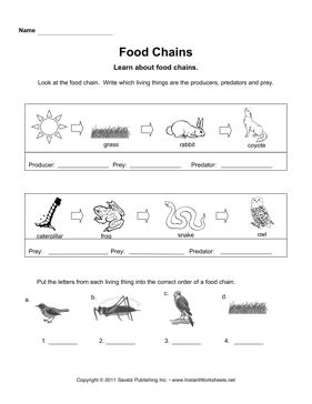 Food Chains | School - Animals | Pinterest | Food chains ...