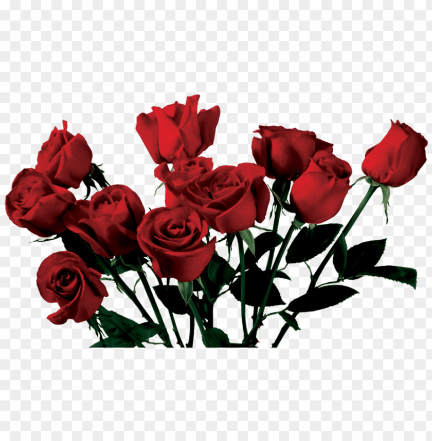 Rose Aesthetic Png Image With Transparent Background Png Free Png Images In 2020 Png Images Free Png Png Images For Editing