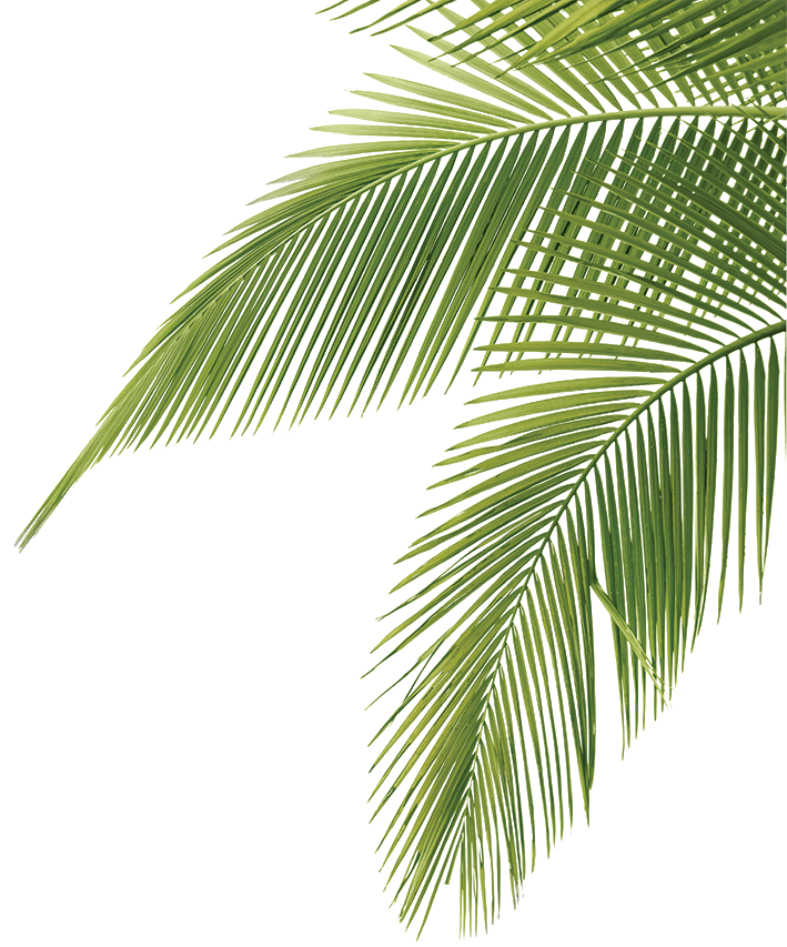 Palm Tree Leaves Illustration Palm Tree Vector Tree Illustration Palm Tree Leaves