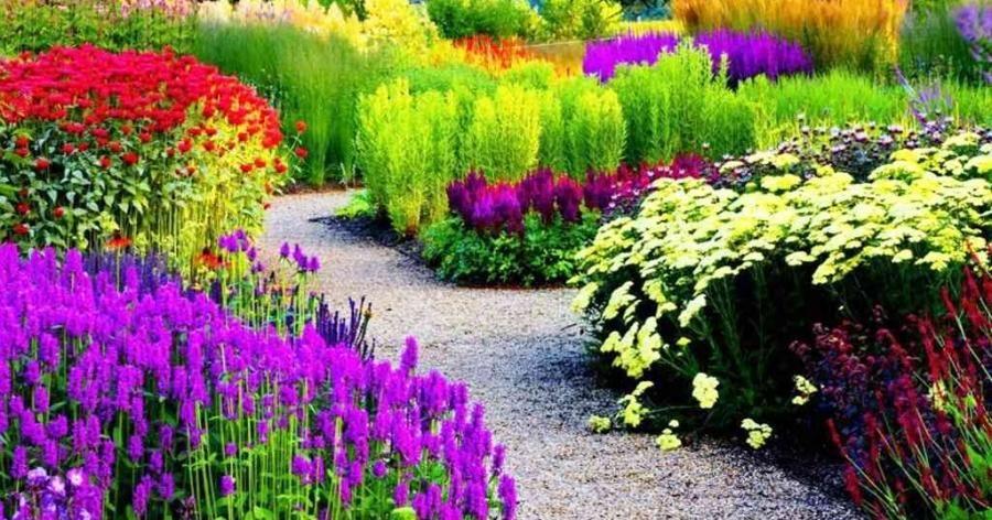 ¿Quieres plantas así de bellas? ¡Descubre la importancia del hierro para ellas!