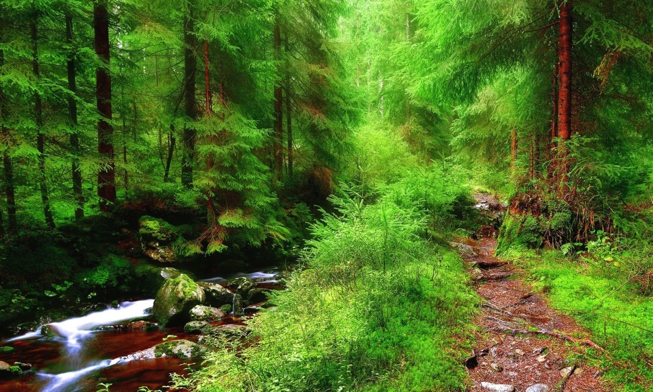 Forest 4k Quality Iphone Wallpaper: Download Nature Forest Trees Small River Stones Path Hdq