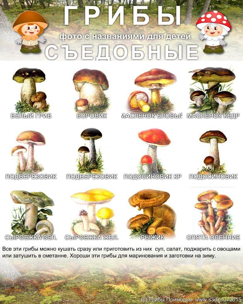 Ну, все сказано в названии. В принципе макароны вы можете использовать того вида, который вам нравится. Мне кажется, что лучше всего с грибами.