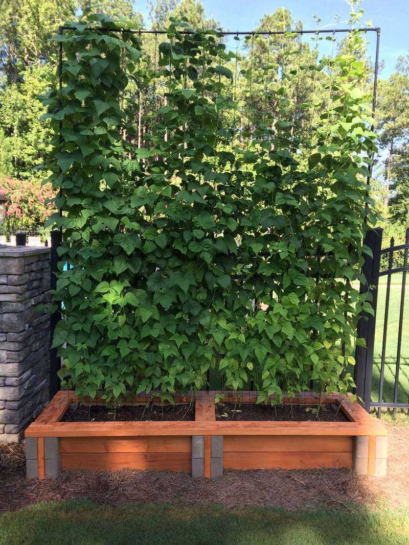 Raised Bed Made With Home Depot Planter Wall Block 2x6 Boards