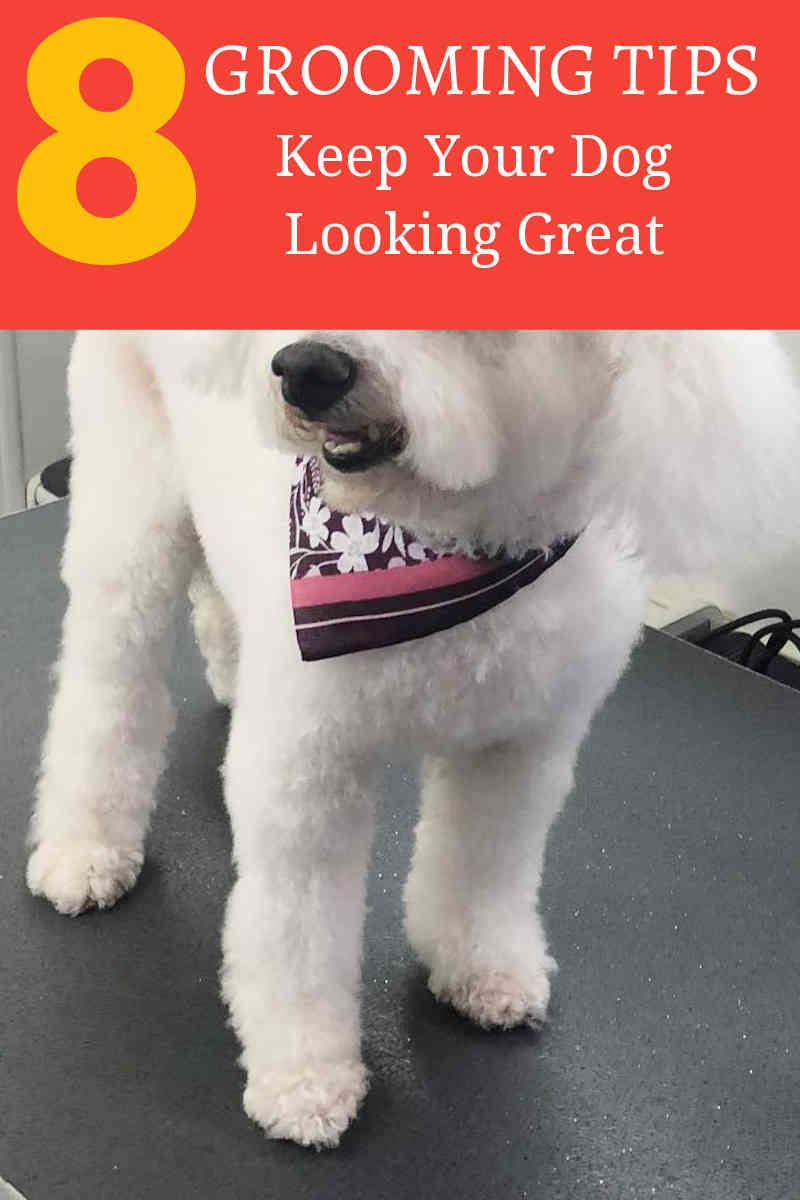 cutting your dog s hair isn t everything rh pinterest com