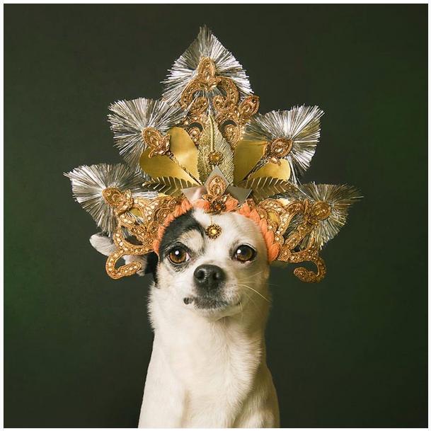 Pin by Berry Thomas on dog portraits | Dog milk, Modern ...