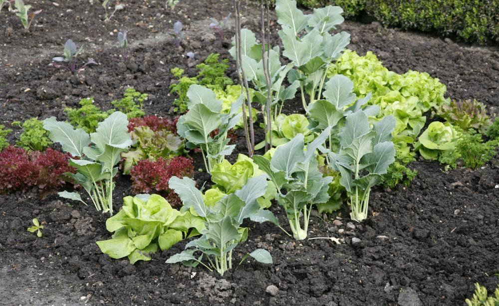 Bodenverbesserung - Geräte, Tipps Und Tricks | Strände Bodenverbesserung Garten Mittel Tipps