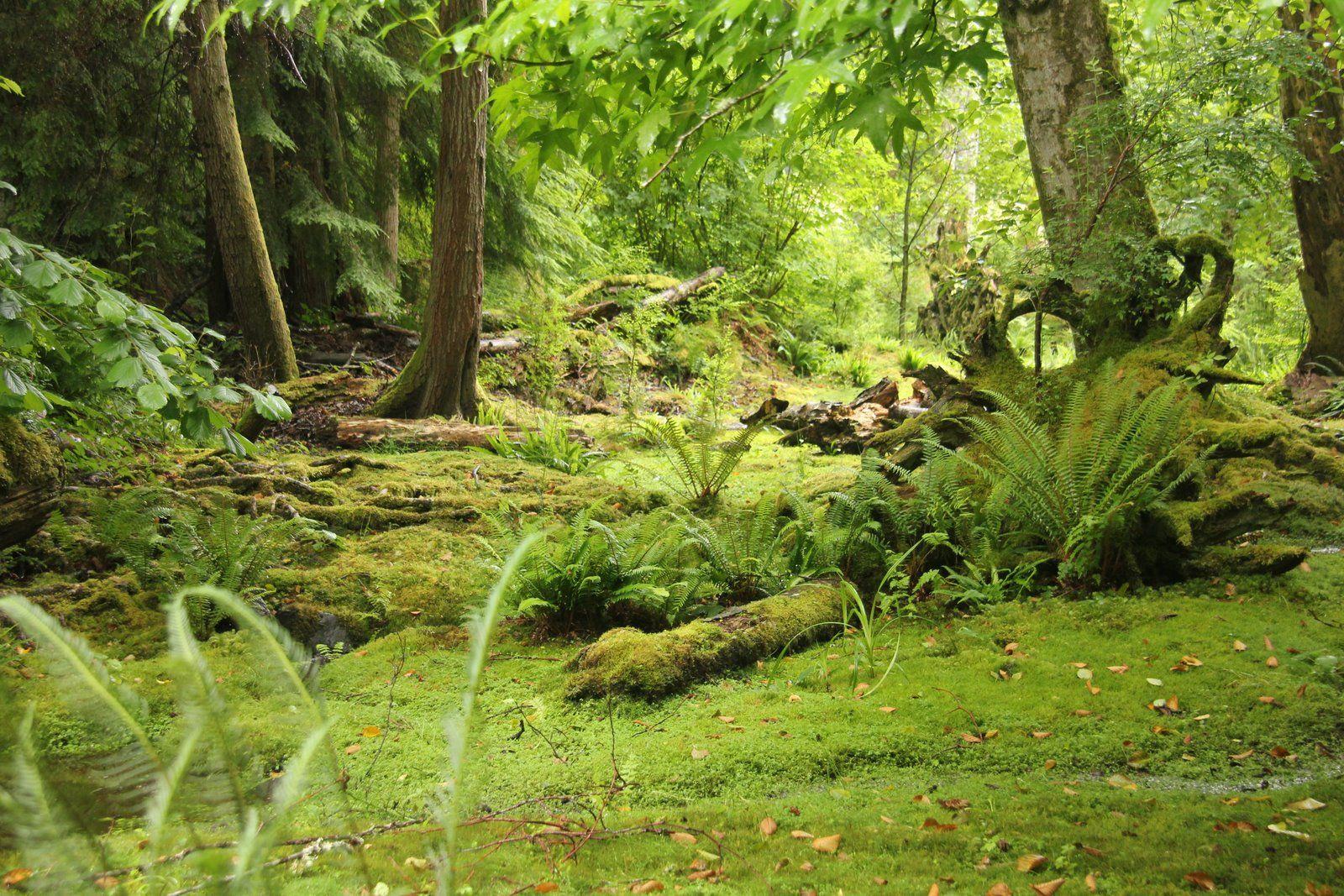 Bloedel Reserve, Seattle WA | Japanese garden, Woodland ...