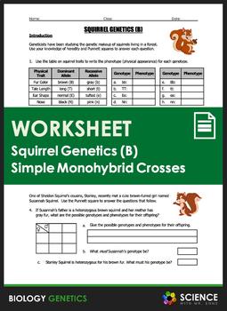 Genetics Monohybrid Crosses Worksheet - worksheet