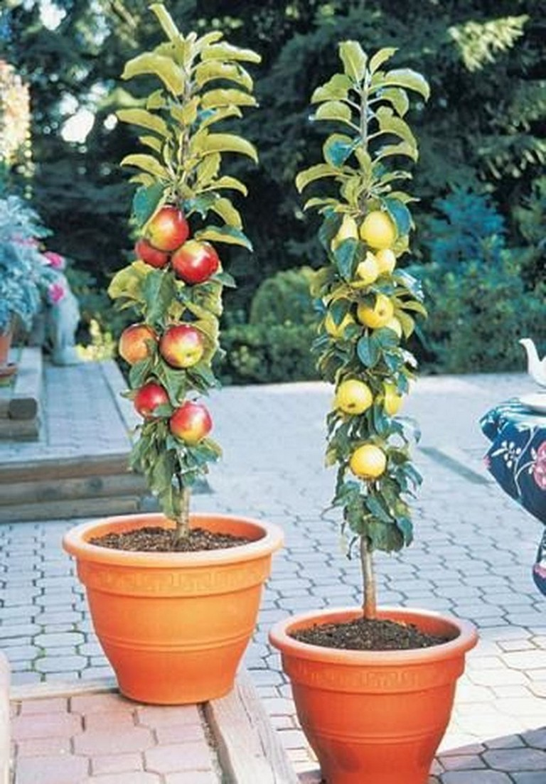 47+ Best Small Vegetable Garden Ideas On A Budget | Small ...